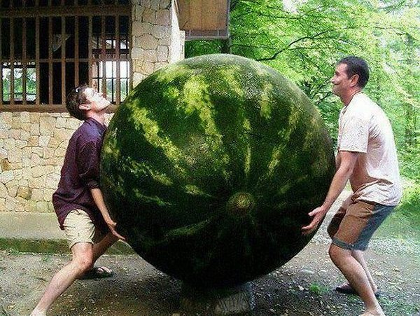 A.baa-Bigest-watermelon-ever